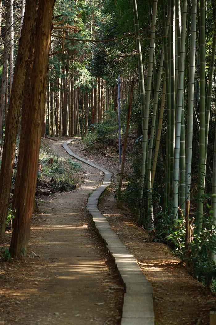 杉林と竹林