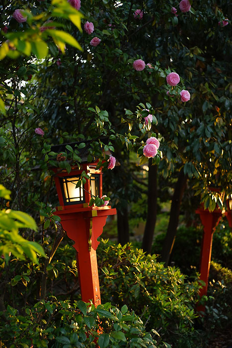 祇園白川①