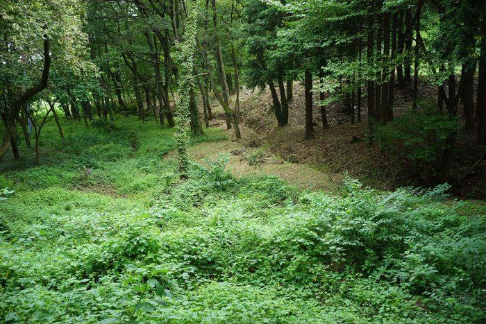 南側の傾斜地