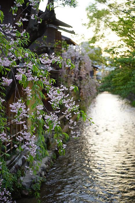 祇園白川②